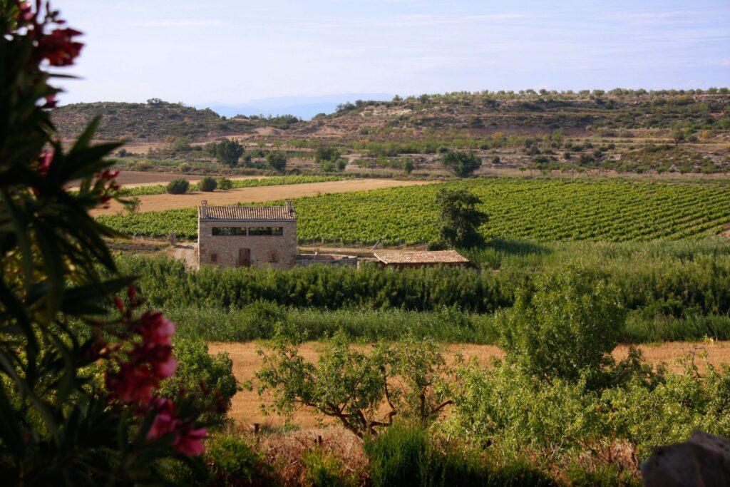 Imatge de Mas Fogonussa, la nostra casa rural, envoltada de les vinyes, el bosc i algunes flors.